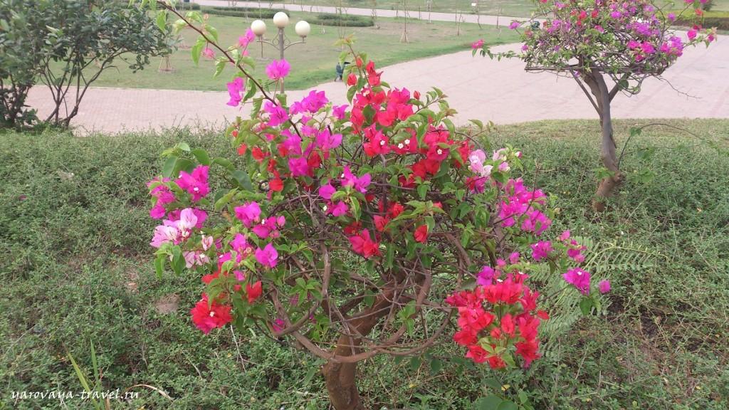 Первый раз встречаю на одном кустике цветочки разных цветов