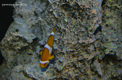 Рыбки самые разные