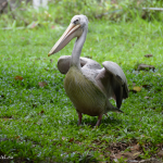 Парк птиц в Куала-Лумпур: смотреть нельзя игнорировать!