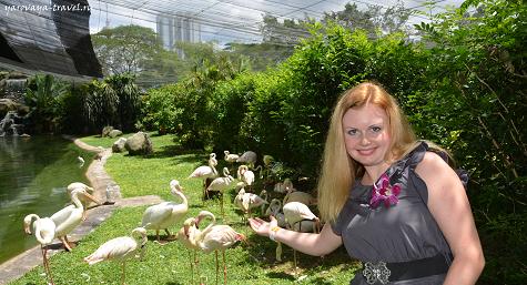 Розовые фламинго, а над ними сетка.