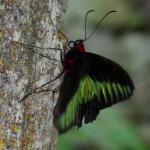 Парк бабочек в Куала-Лумпур, или красота – страшная сила.