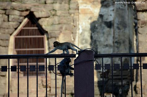 Лопбури - город обезьян.