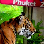 Зоопарк на Пхукете: с детьми идти обязательно.