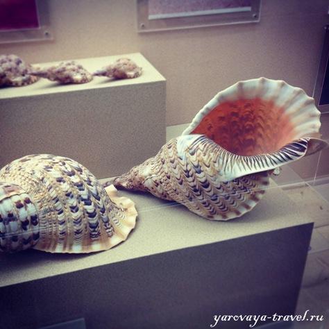 музей ракушек на Пхукете