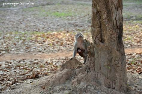 обезьяны нападают