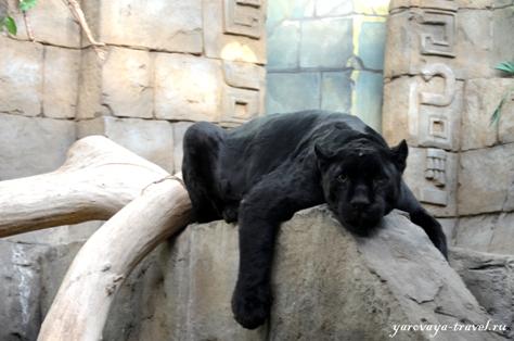 московский зоопарк отзывы