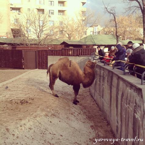 самый большой зоопарк в москве