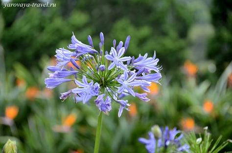 сад цветов в далате