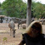 Зоопарк в Бангкоке – бюджетное место для развлечения детей.