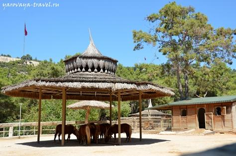 Зоопарк в Анталии.