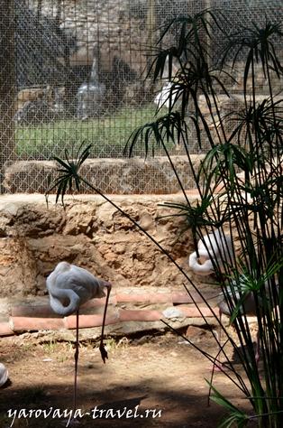 зоопарк в анталии