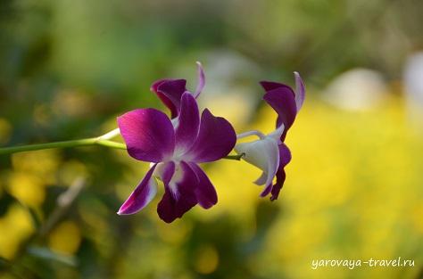 Остров Орхидей. Вьетнам.