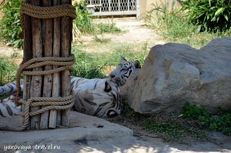 вьетнам винперл парк развлечений