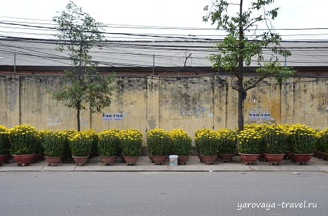 праздник тет вьетнам