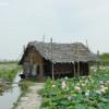 Ферма съедобных лотосов по дороге к озеру Тонлесап.