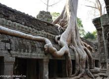 Храмы Камбоджи: Та Пром.