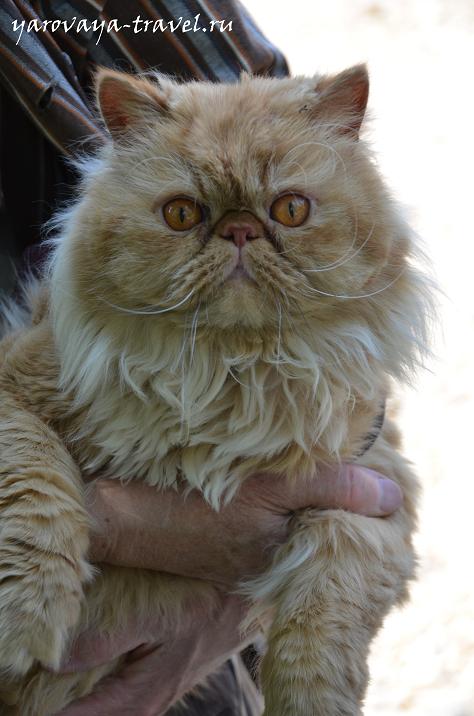 Бабушкин котик