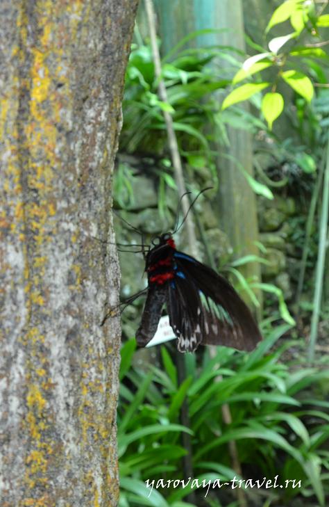 В парке бабочек в Малайзии