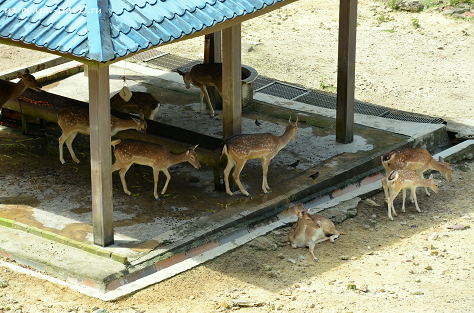 парк оленей в Куала-Лумпур