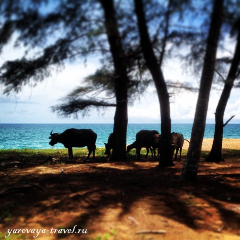отели острова пхукет