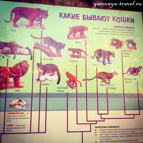 сайт зоопарка москва