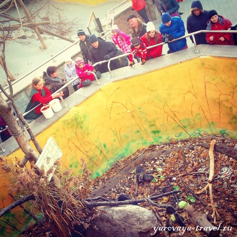 зоопарк москвы официальный сайт