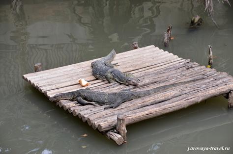 зоопарк дусит бангкок
