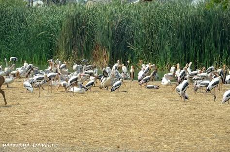 сафари парк бангкок