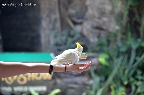 мир сафари