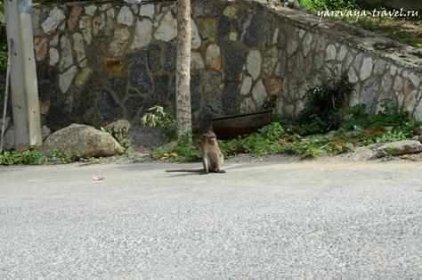 хуахин обезьяны