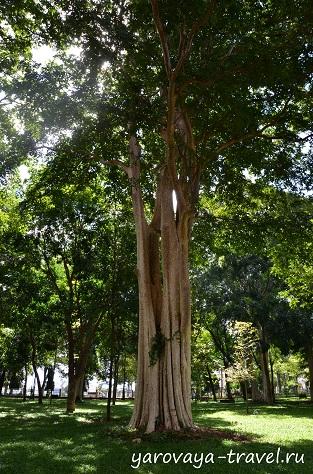 Рядом с музеем растут такие вековые деревья.