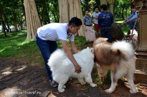 И гуляют такие красивые собаки.