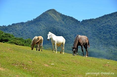 лангбианг гора