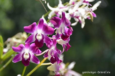 остров орхидей нячанг