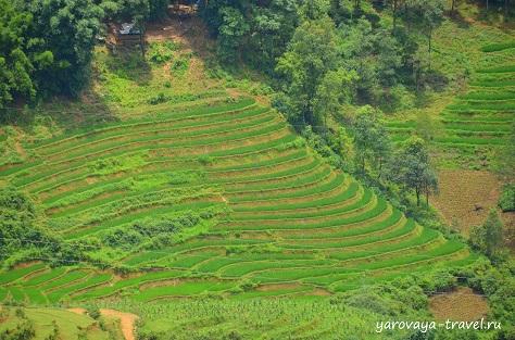 погода сапа вьетнам