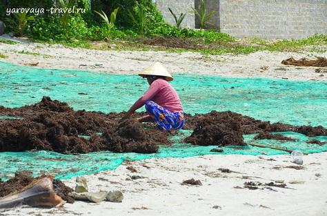 Женщины водоросли раскладывают и сушат.