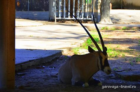 Зоопарк в Хошимине.