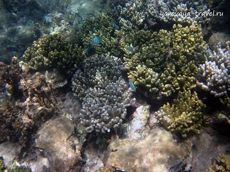 Кораллы и несколько рыбок.
